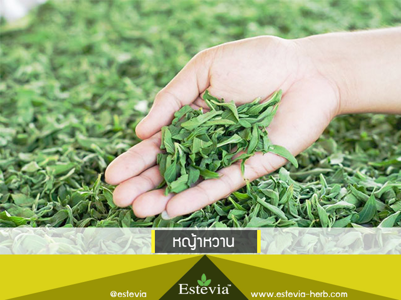 หญ้าหวาน Estevia เอสตีเวีย